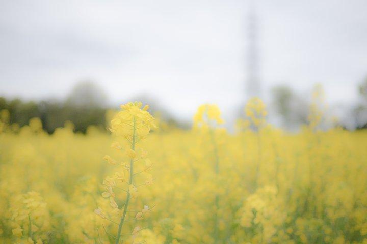 おぼろな春の牧場_d0353489_16411043.jpg