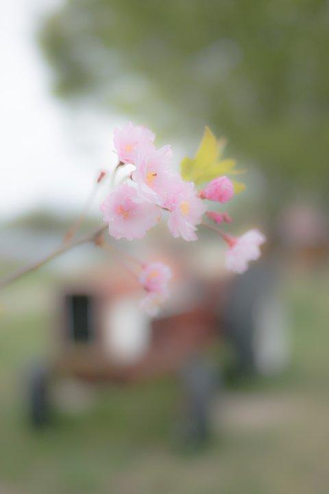 おぼろな春の牧場_d0353489_16425721.jpg