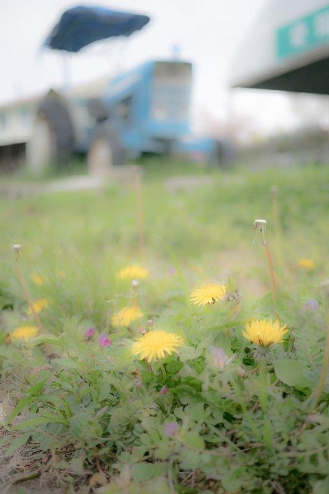 おぼろな春の牧場_d0353489_1642891.jpg