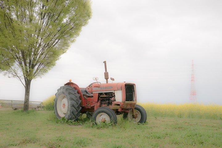 おぼろな春の牧場_d0353489_16431547.jpg