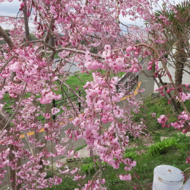 G9X試し撮り@五橋公園~広瀬川の巻_f0100593_18222465.jpg