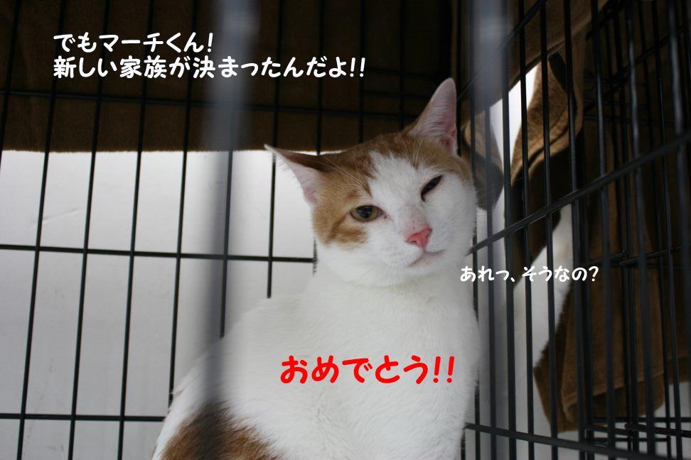 4/9 センター猫の里親会_f0242002_1241270.jpg