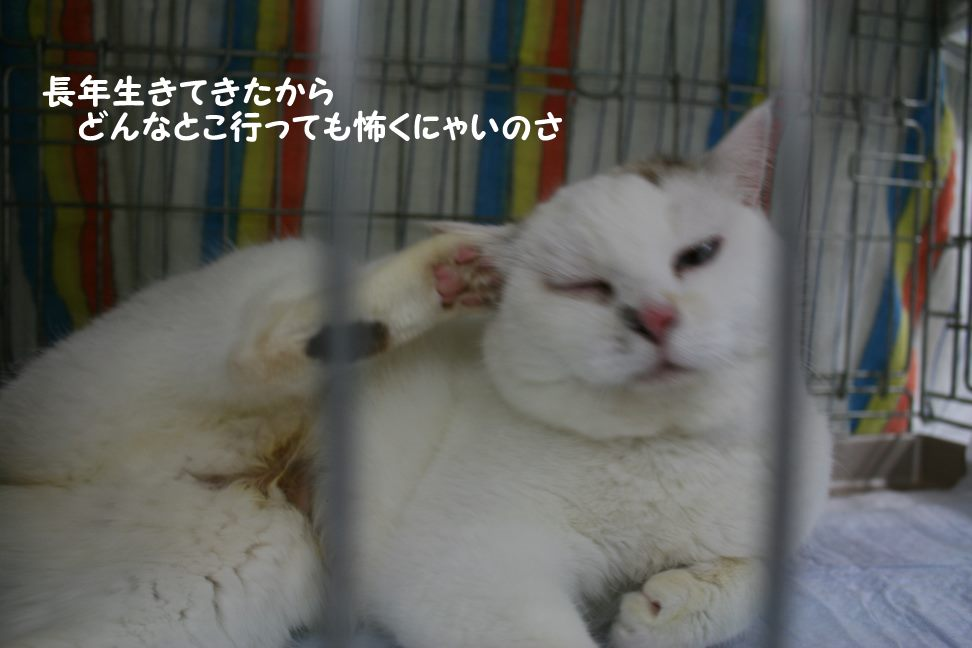4/9 センター猫の里親会_f0242002_1243712.jpg