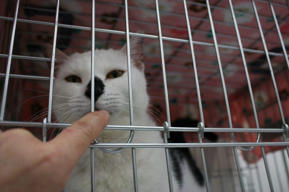 4/9 センター猫の里親会_f0242002_1281248.jpg
