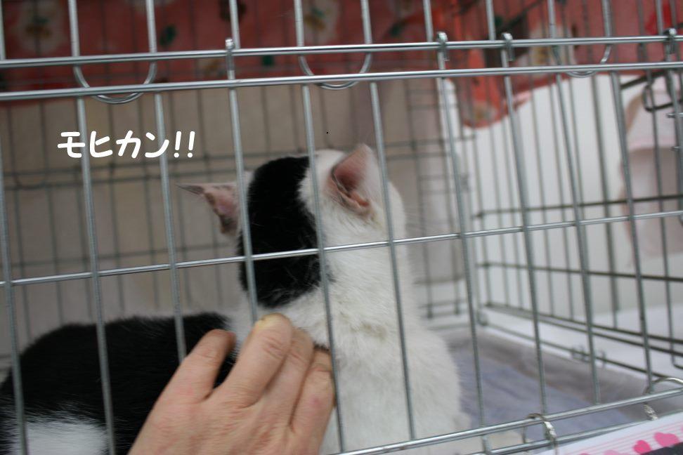 4/9 センター猫の里親会_f0242002_1282235.jpg