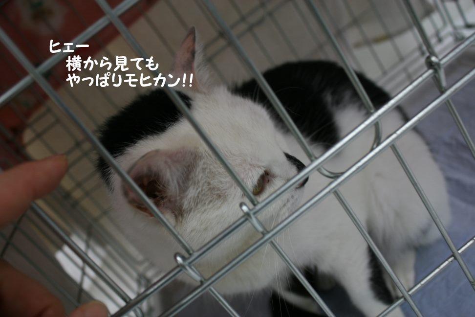 4/9 センター猫の里親会_f0242002_1283617.jpg