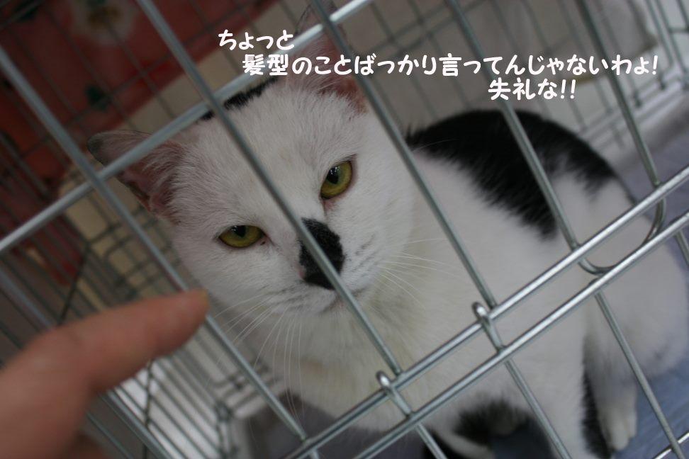 4/9 センター猫の里親会_f0242002_1284846.jpg