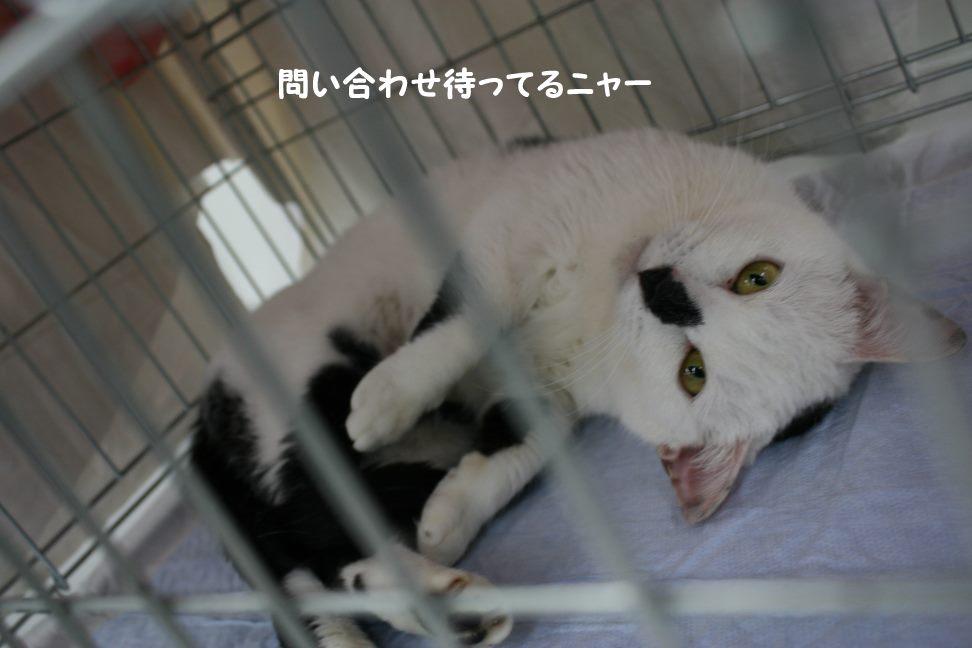4/9 センター猫の里親会_f0242002_1285925.jpg