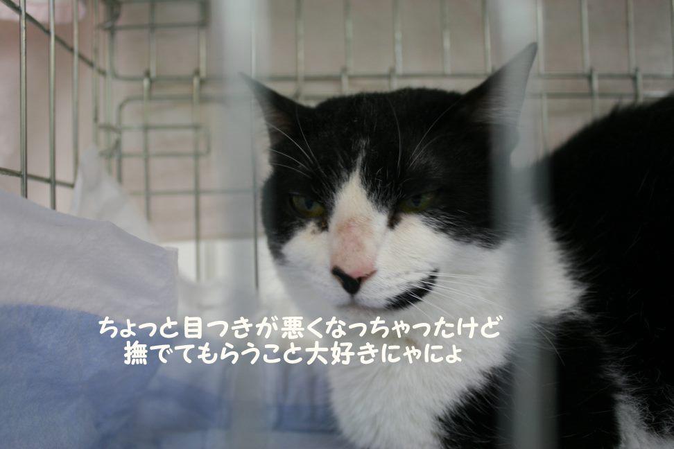 4/9 センター猫の里親会_f0242002_1335187.jpg