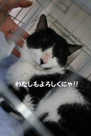 4/9 センター猫の里親会_f0242002_134533.jpg