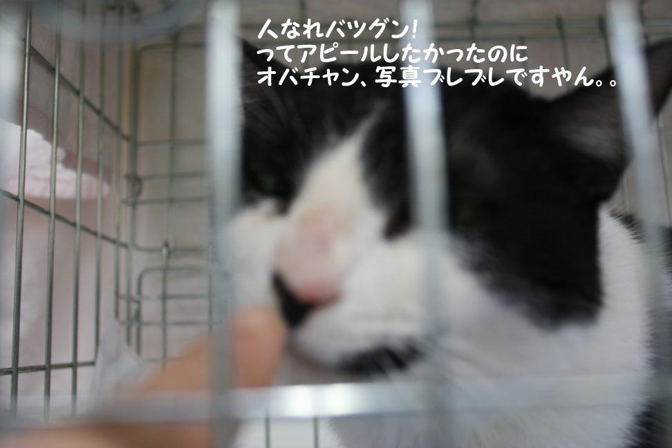 4/9 センター猫の里親会_f0242002_134572.jpg