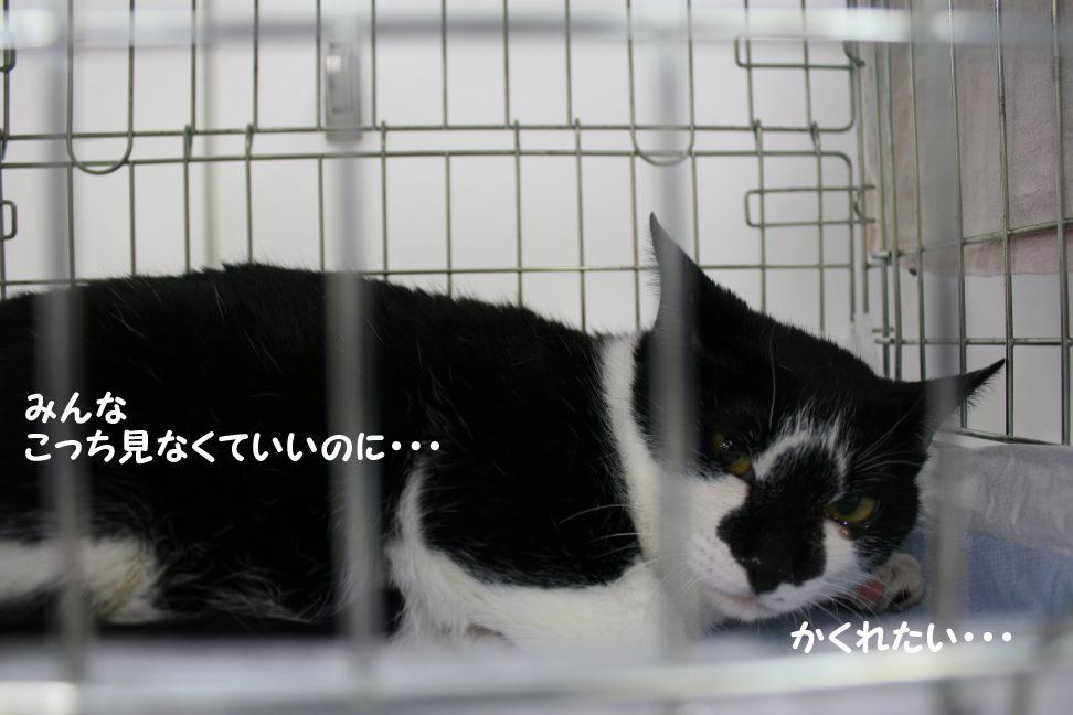 4/9 センター猫の里親会_f0242002_1432120.jpg