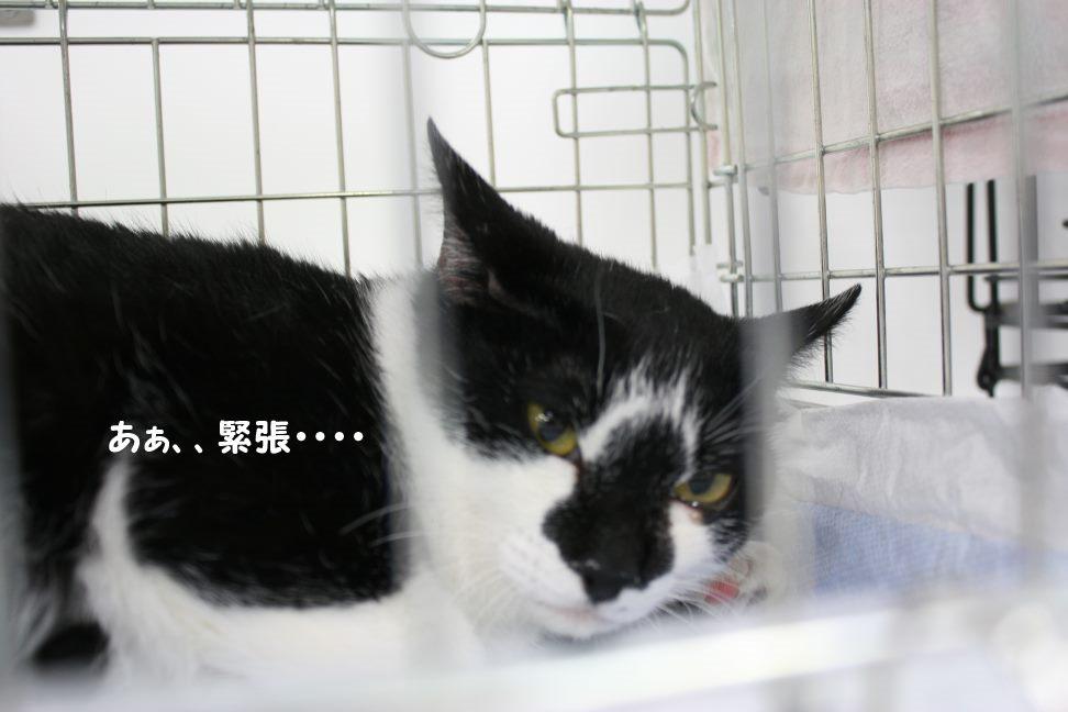 4/9 センター猫の里親会_f0242002_143498.jpg