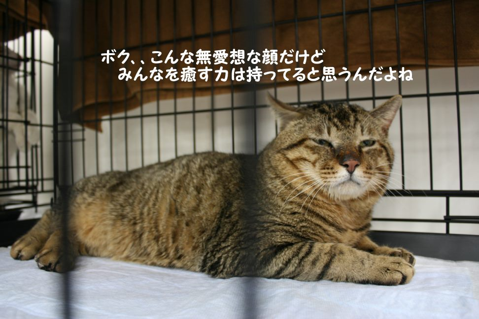 4/9 センター猫の里親会_f0242002_1445651.jpg
