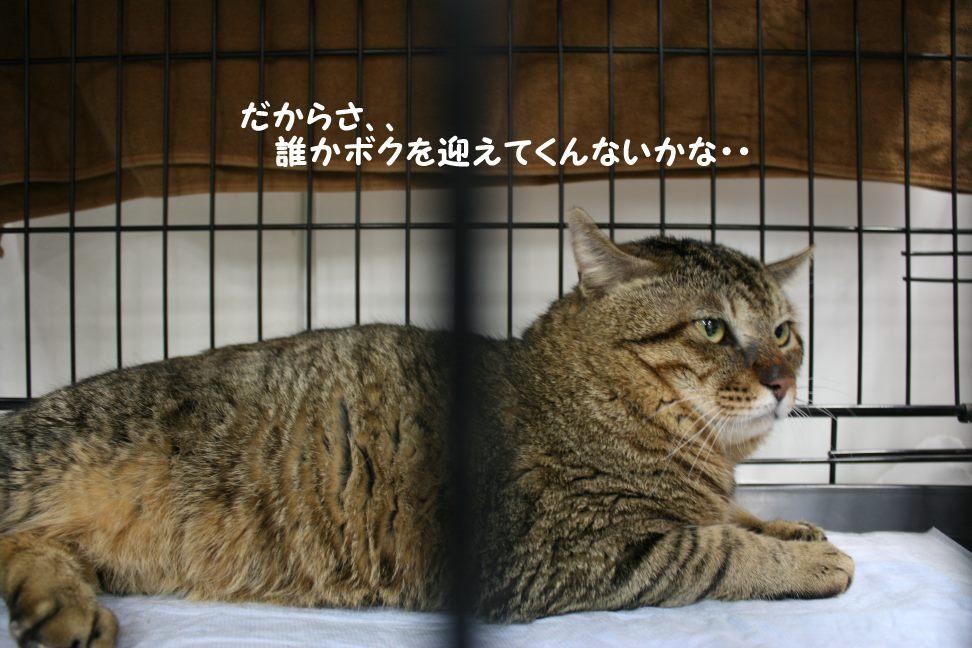 4/9 センター猫の里親会_f0242002_1451760.jpg