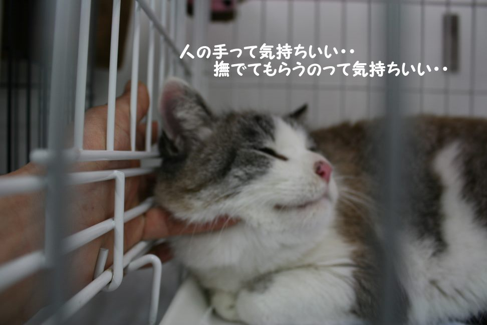 4/9 センター猫の里親会_f0242002_1472124.jpg