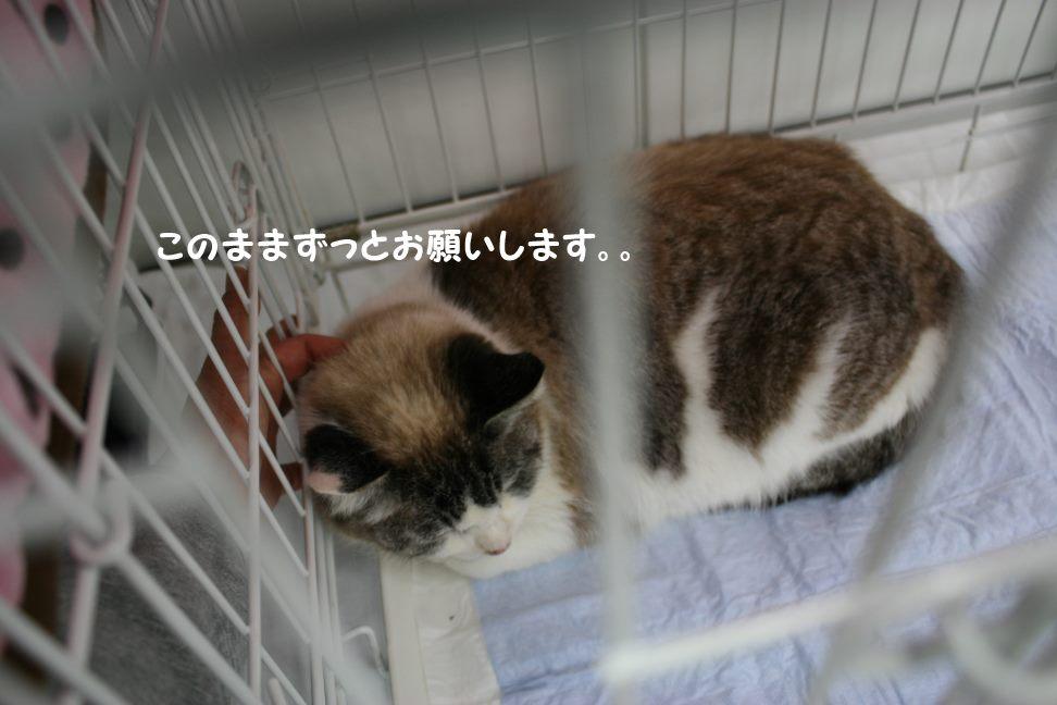 4/9 センター猫の里親会_f0242002_1474029.jpg