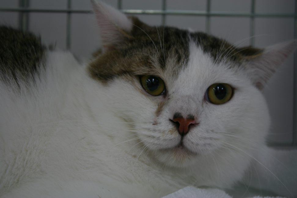 4/9 センター猫の里親会_f0242002_1485475.jpg