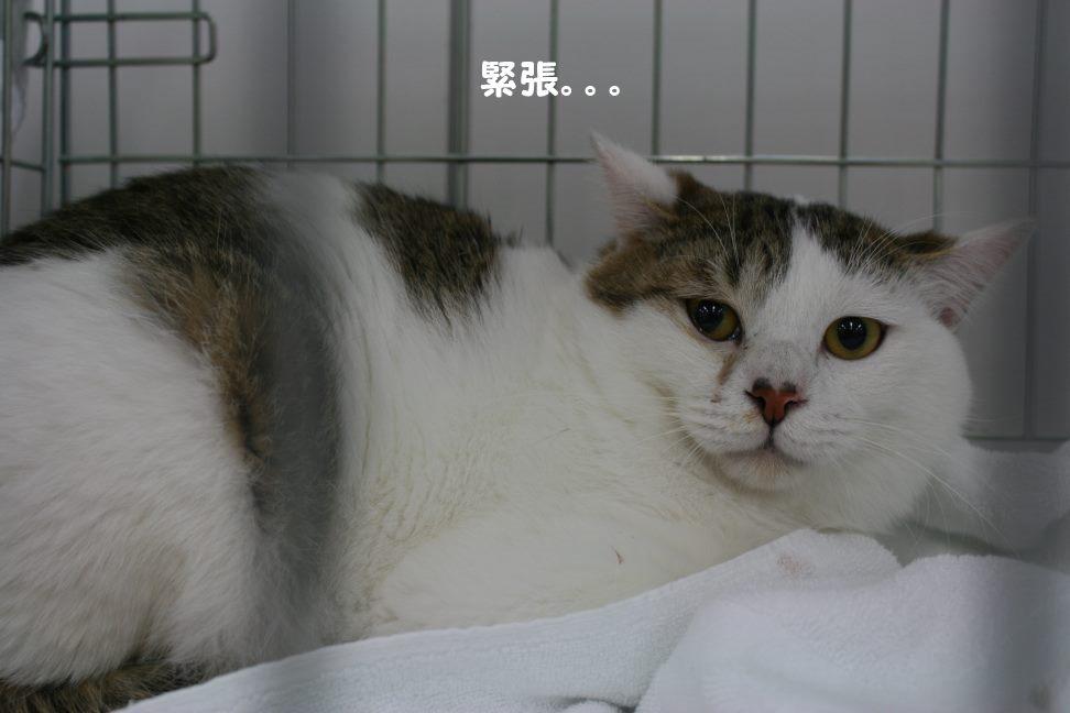 4/9 センター猫の里親会_f0242002_1495617.jpg