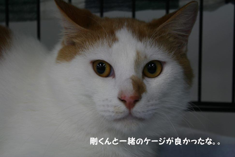 4/9 センター猫の里親会_f0242002_1501492.jpg