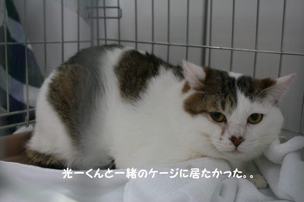 4/9 センター猫の里親会_f0242002_1503377.jpg