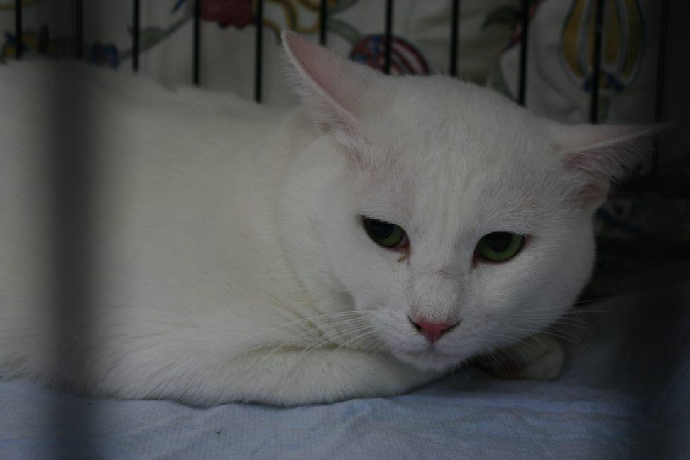 4/9 センター猫の里親会_f0242002_1544122.jpg