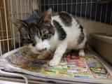 4/9 センター猫の里親会_f0242002_1575371.jpg