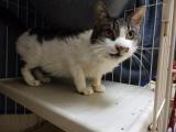 4/9 センター猫の里親会_f0242002_158723.jpg