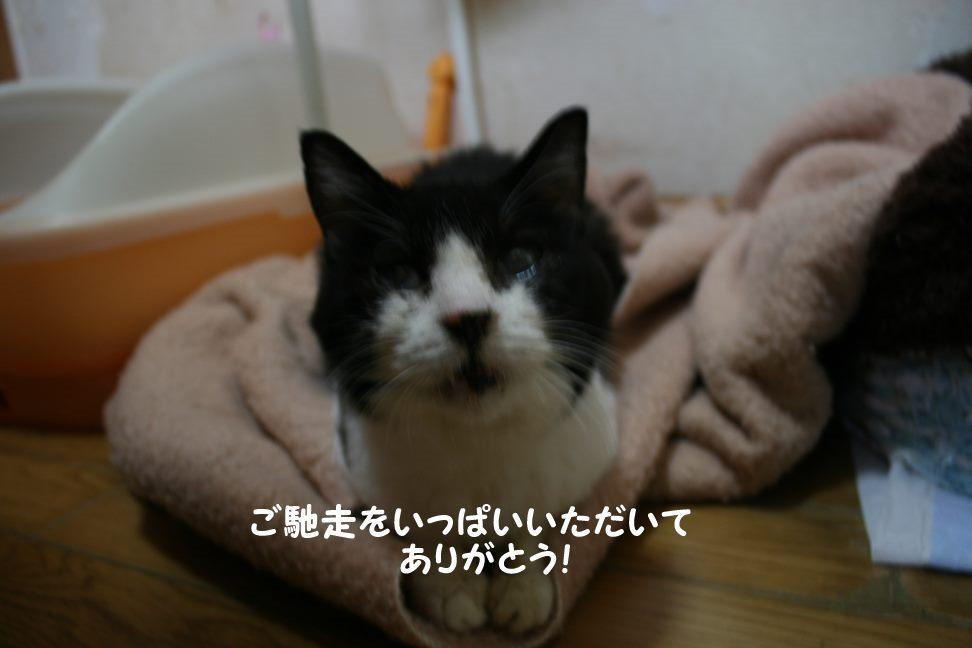 4/9 センター猫の里親会_f0242002_1592256.jpg