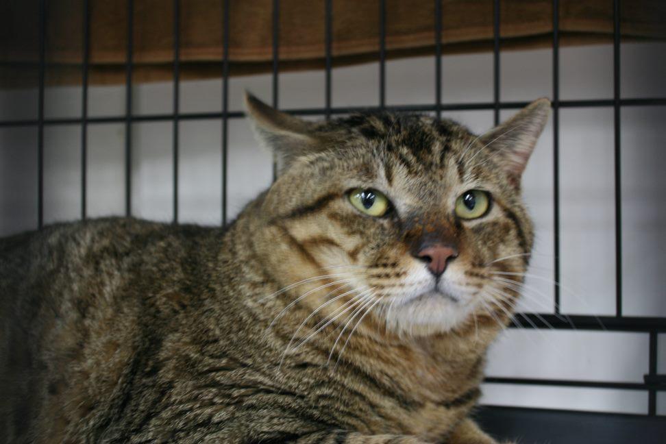 4/9 センター猫の里親会_f0242002_253939.jpg