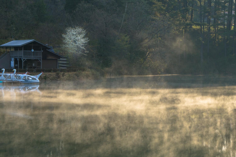 春の冷えた朝_c0220824_11352569.jpg