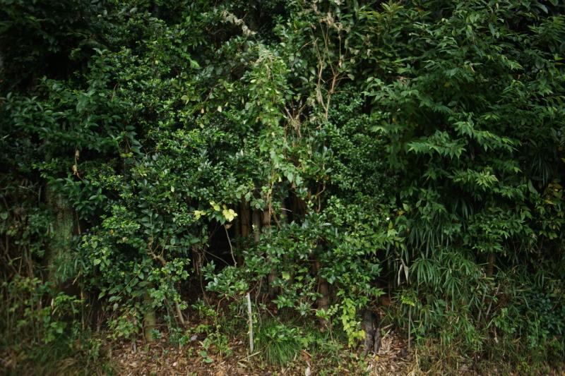 SUNACTINON 28mmF2.8_c0109833_16241515.jpg
