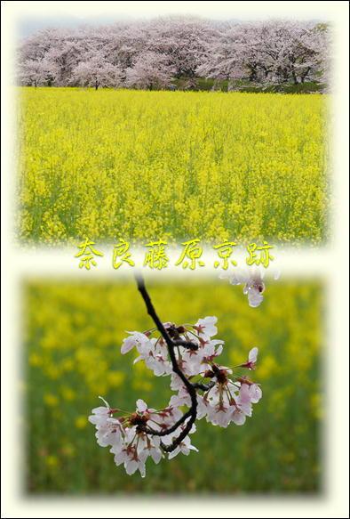 桜_f0292335_22493619.jpg
