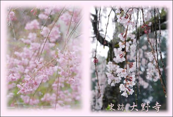 桜_f0292335_22501829.jpg