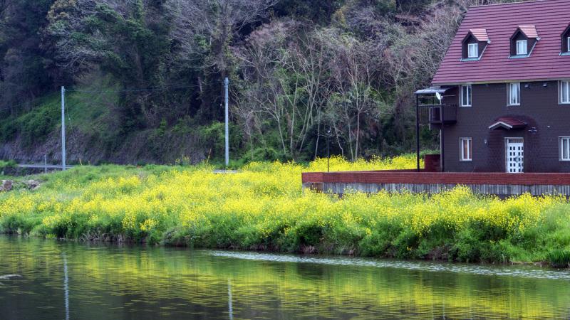 香東川 河川敷の桜 2016/04/09_d0246136_12063299.jpg