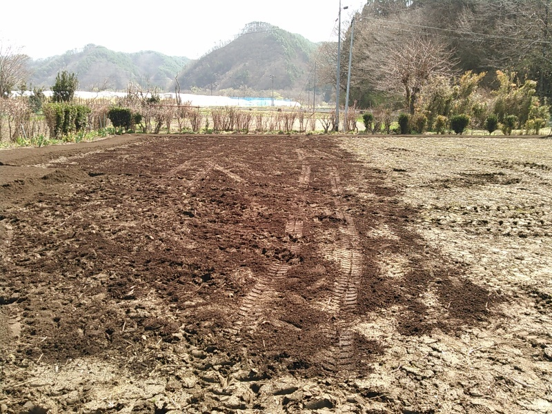 私のまめつぶ自給農園2016 Vol.2畑の準備_b0206037_12305079.jpg