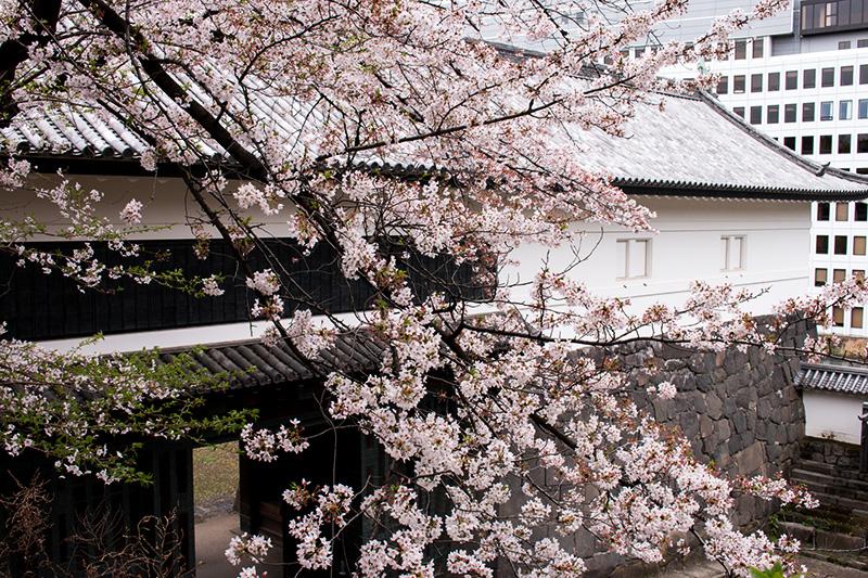 皇居の桜_a0003650_22114177.jpg