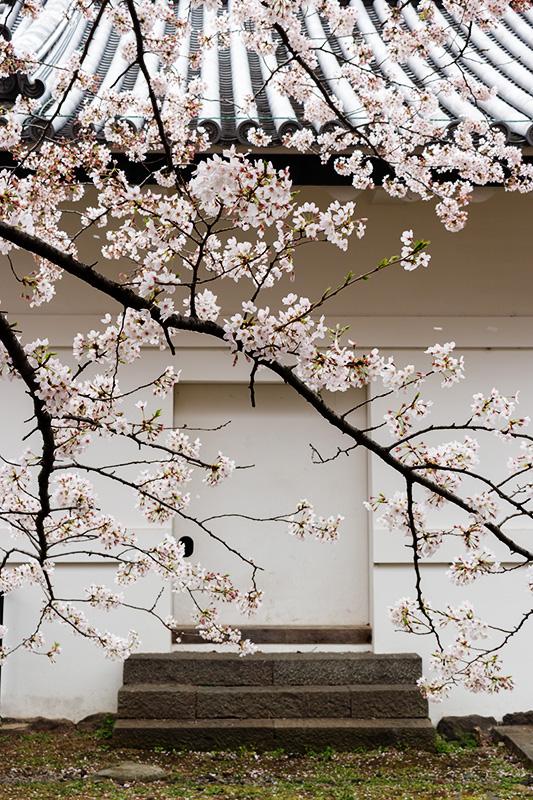 皇居の桜_a0003650_22115378.jpg