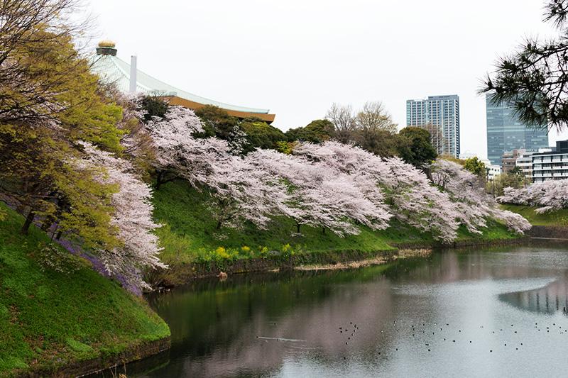 皇居の桜_a0003650_22122614.jpg