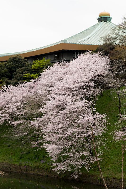 皇居の桜_a0003650_22124862.jpg