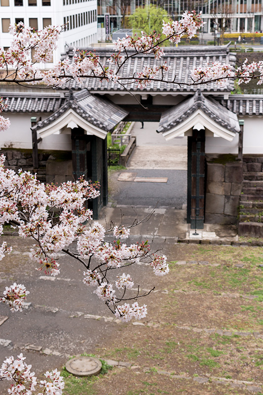 皇居の桜_a0003650_2251823.jpg