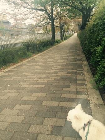 桜が散って、、_b0341759_18244064.jpg
