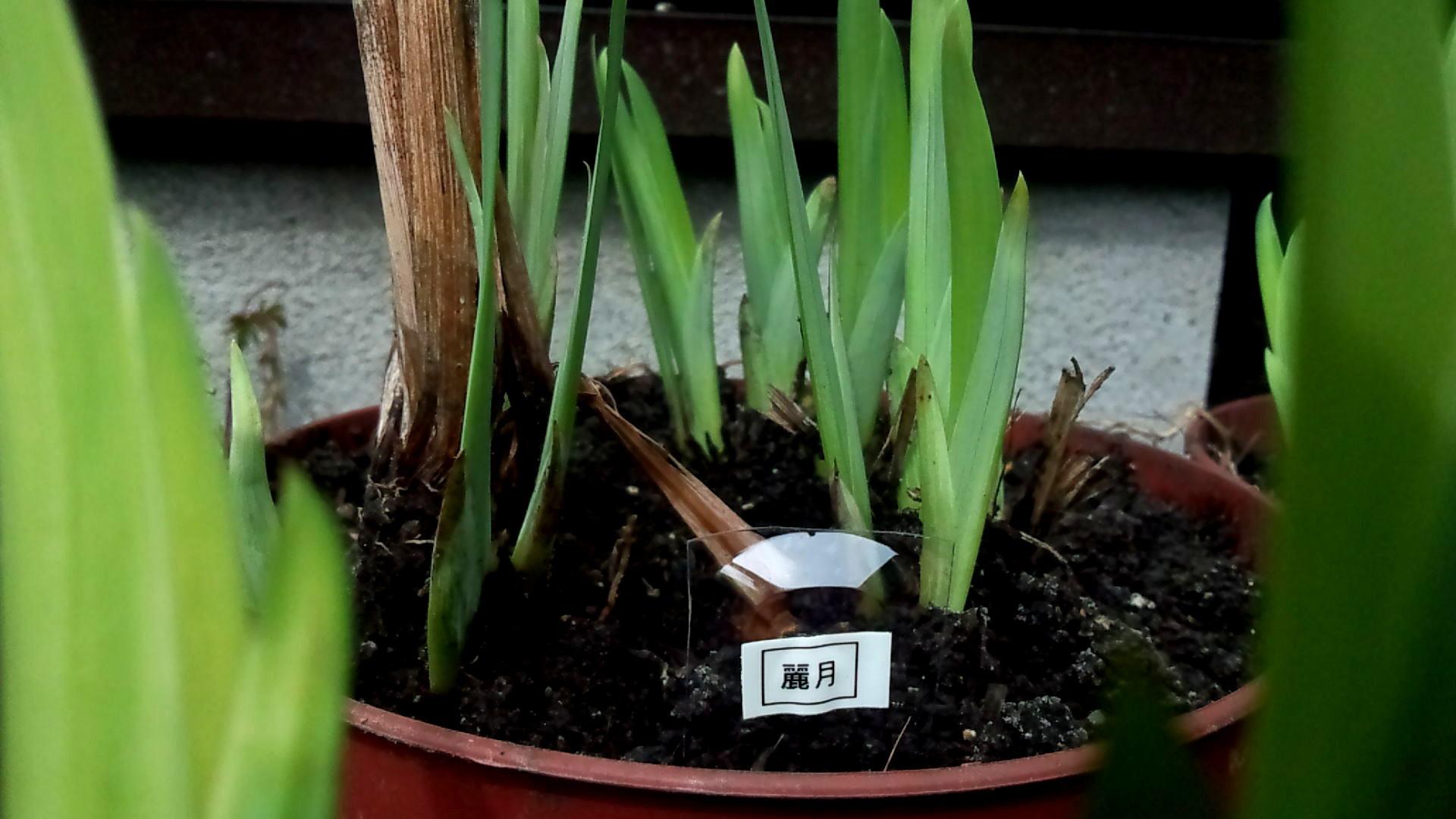 庭『自作(笑)のネームプレートが意外と役立った』_b0362459_10540039.jpg