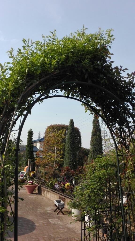 心躍る朝の庭散歩   _e0356469_22493445.jpg