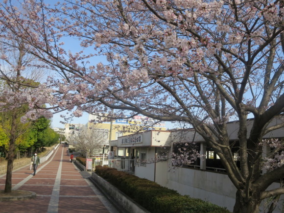 桜の季節も終わってしまいました。_c0001670_20323601.jpg
