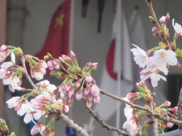 桜の季節も終わってしまいました。_c0001670_20324071.jpg