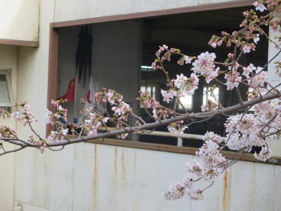 桜の季節も終わってしまいました。_c0001670_20324749.jpg
