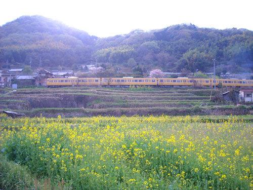 南薫造記念館 菜の花咲きました_e0175370_14305842.jpg