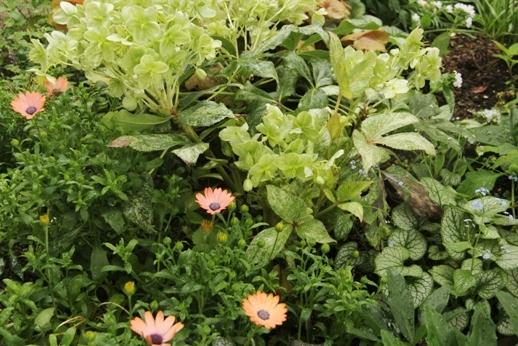 ヒメウツギの季節_b0214473_8483967.jpg