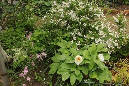 ヒメウツギの季節_b0214473_848877.jpg